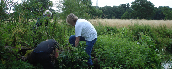 Clearing Himalayan Balsam<br />near the river