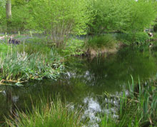Fishpond in copse